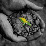 Vai alla scheda del corso Microcredito e microfinanza come strumenti del welfare